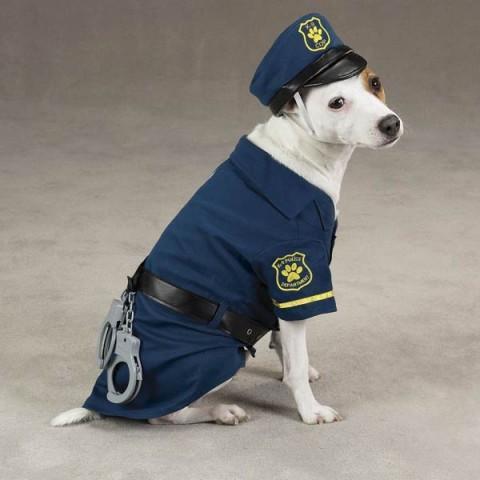 caine-politist