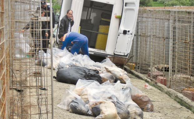 Masacrul-de-la-Padocul-Primariei-Botosani