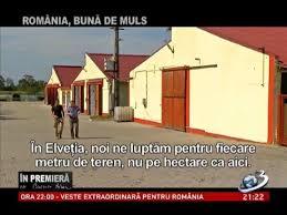 ROMANIA BUNA DE MULS