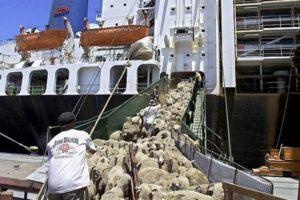 Opriti exportul de animale vii din Romania