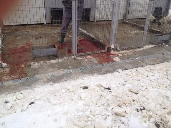 Mega Afacere cu câini fără stăpân, la Craiova
