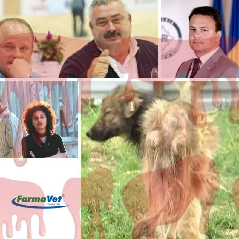 Vestită ucigașă de câini din Prahova, post de conducere într-o firmă protejată de SRI