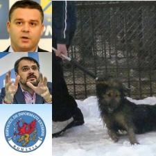 """""""Serviciile"""" si promotorii Afacerii Maidanezul"""