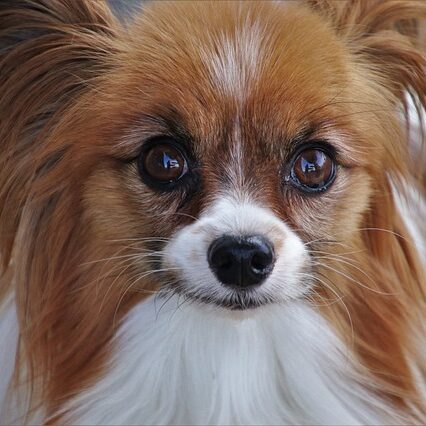 dog-4352101_640